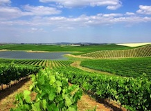 Wine Tour in Alentejo - Full day experience from Lisbon