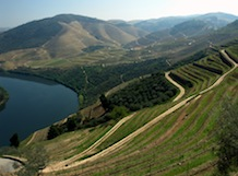 Douro Region Wine Tour with Lunch in the Vineyard – Full day experience
