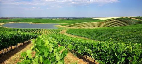 Resultado de imagem para alentejo vineyards