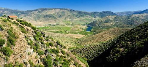 trás os montes wine region in portugal guided wine tours